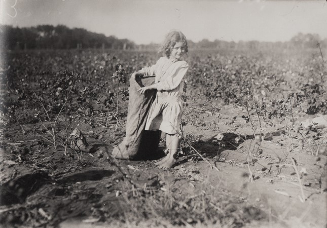 Cotton Picker Girl
